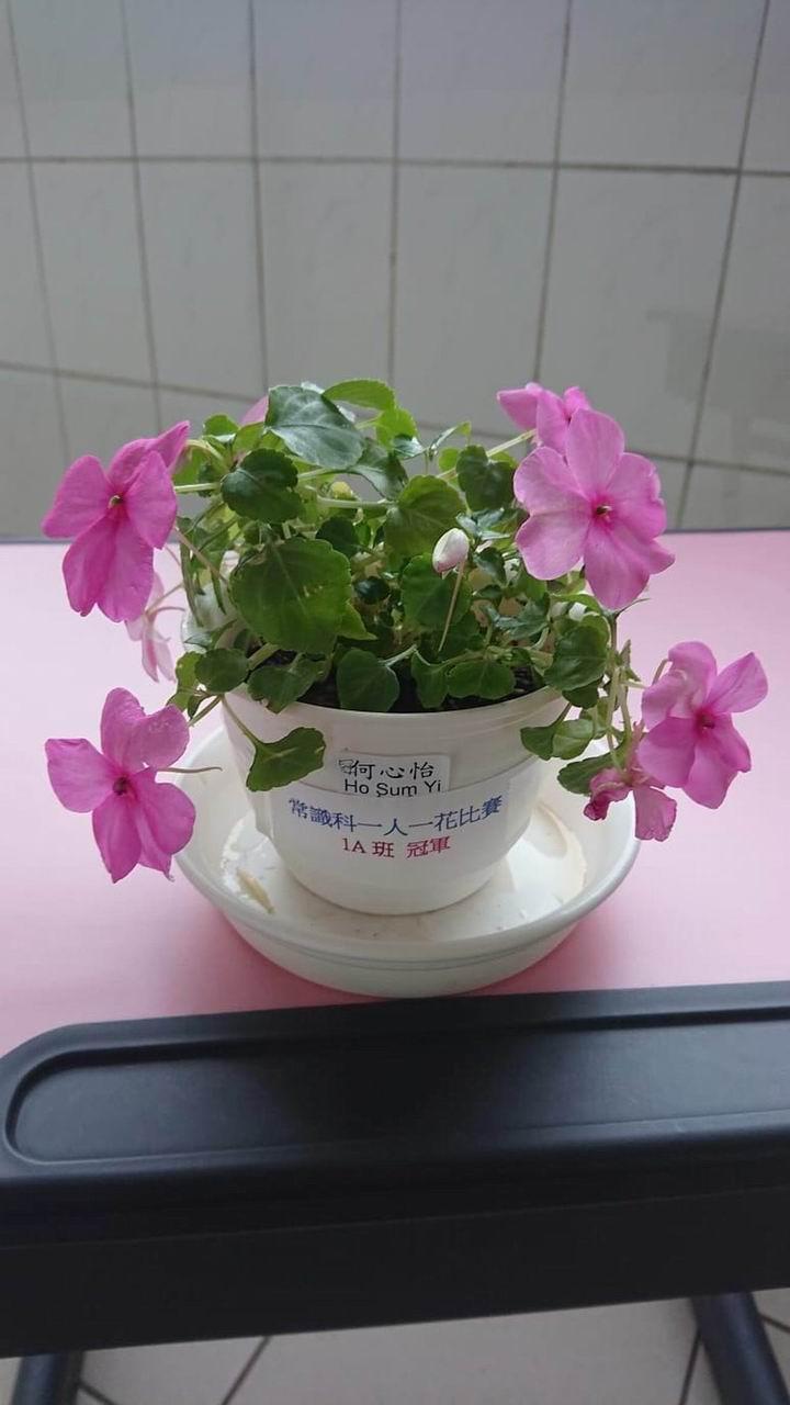 https://plkcjy.edu.hk/sites/default/files/diao_zheng_da_xiao_1a_guan_.jpg