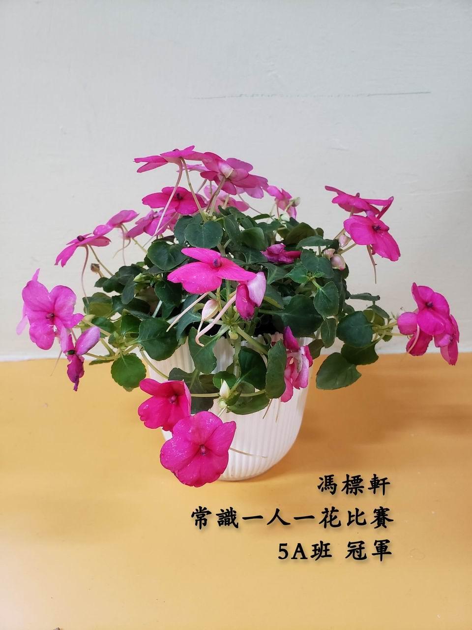 https://plkcjy.edu.hk/sites/default/files/diao_zheng_da_xiao_5a_guan_.jpg