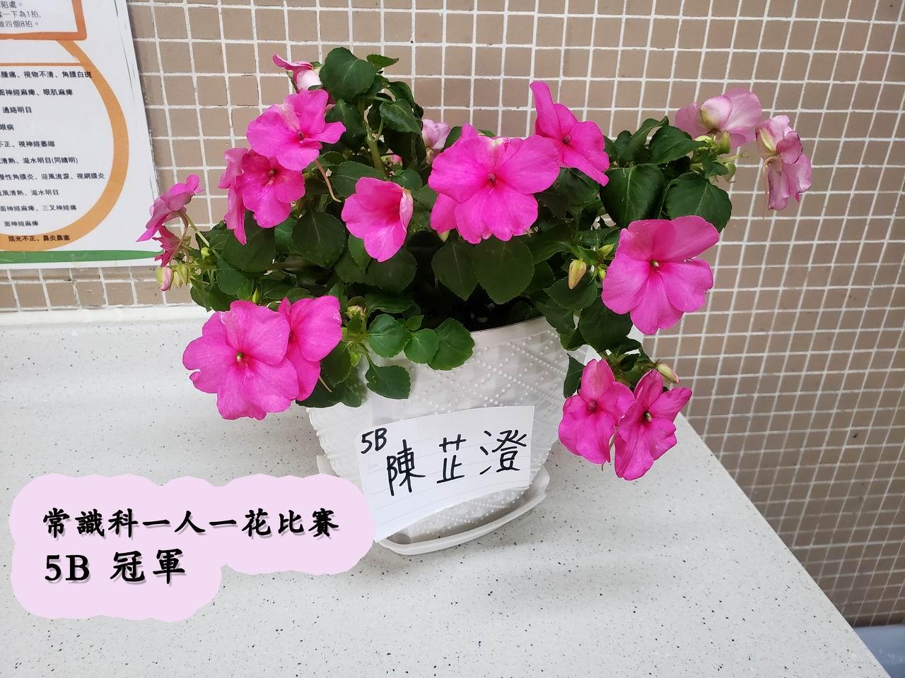 https://plkcjy.edu.hk/sites/default/files/diao_zheng_da_xiao_5b_guan_.jpg