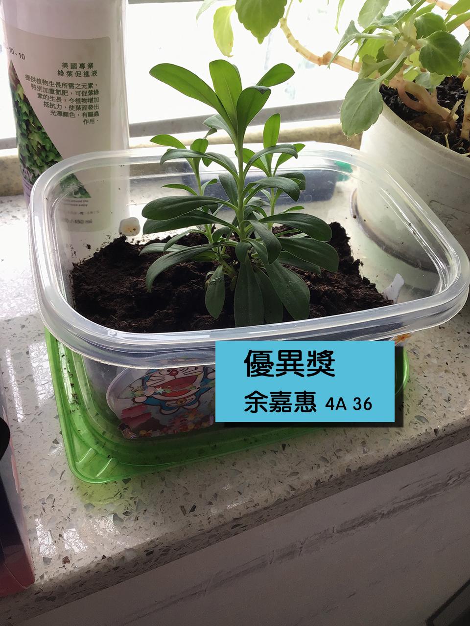 https://plkcjy.edu.hk/sites/default/files/you_yi_jiang_4a_36_yu_jia_hui_.jpg