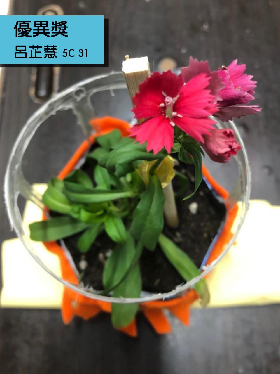 https://plkcjy.edu.hk/sites/default/files/you_yi_jiang_5c_31_lu_zhi_hui_.jpg