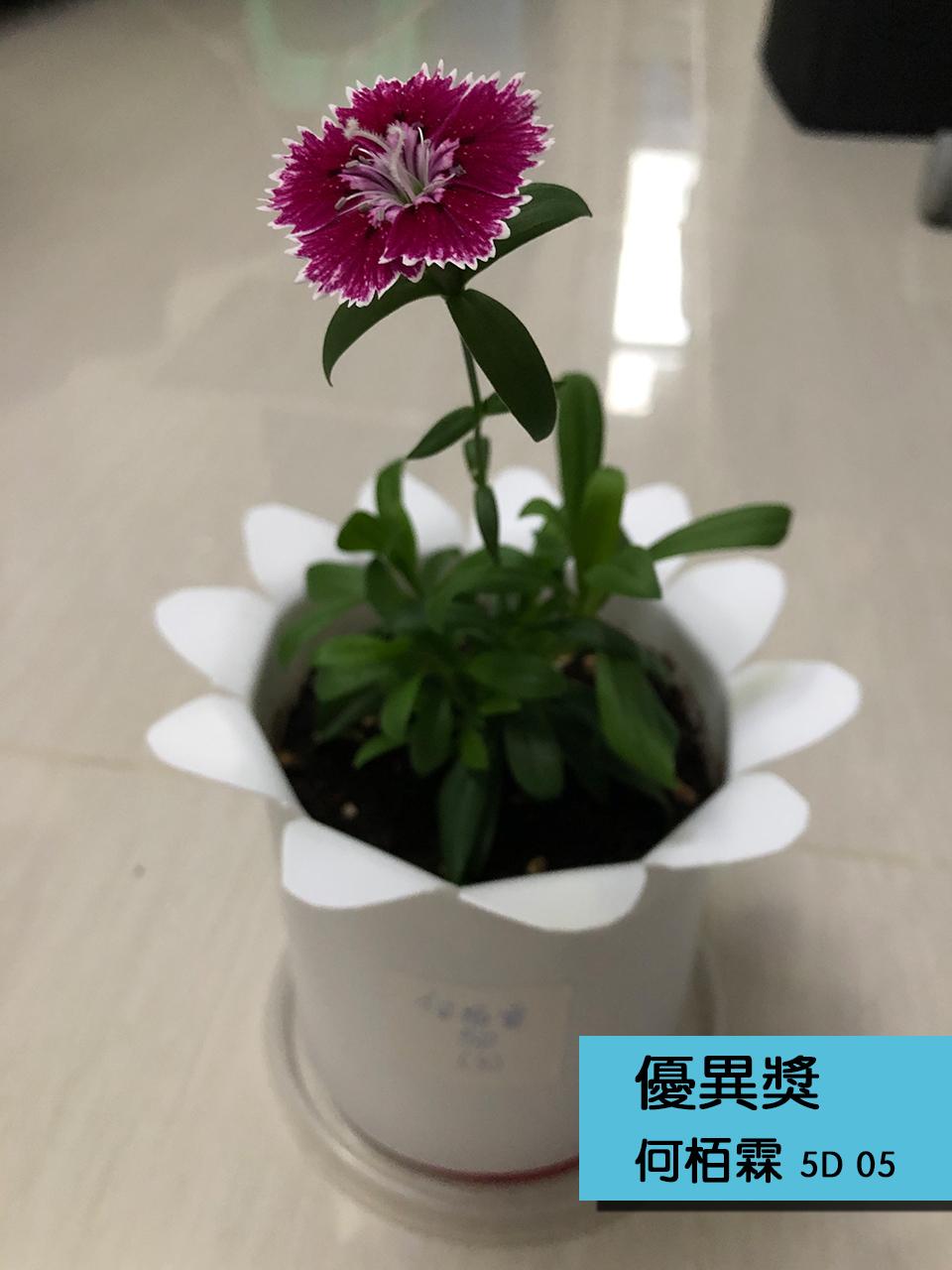 https://plkcjy.edu.hk/sites/default/files/you_yi_jiang_5d_05_he_bo_lin_.jpg